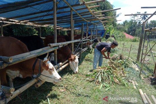 Satuan Tugas pantau mobilitas pengungsi Merapi di Glagaharjo