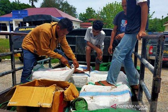 Kemarin, daging rusa ilegal disita hingga 'Kijang' terguling di Medan