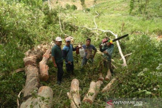 DLHK NTB: Ada korelasi antara kebutuhan kayu dengan pidana kehutanan