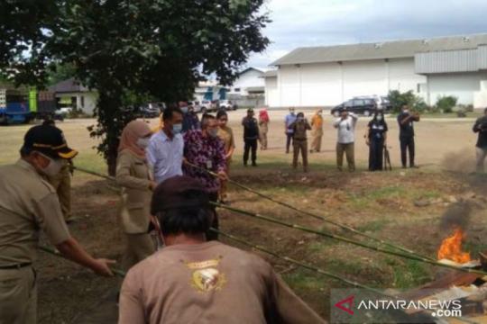 DKI musnahkan 1,3 ton daging babi yang didistribusi secara ilegal