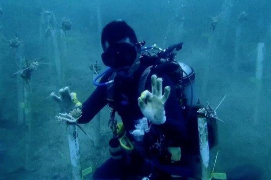 Bali bangun wisata alam bawah laut di lima titik kawasan objek wisata pantai
