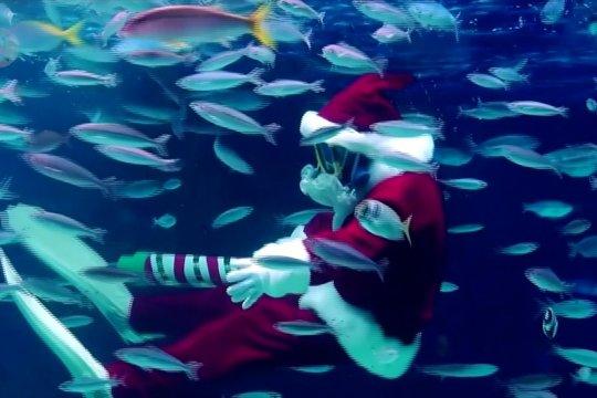 Menonton aksi Sinterklas menyelam di akuarium