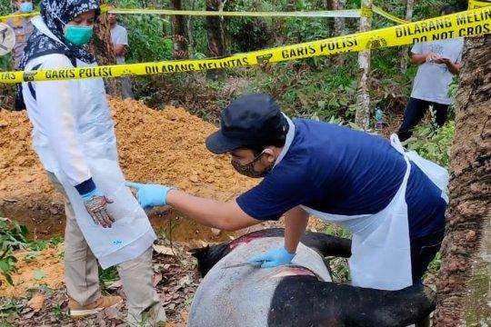 BBKSDA pastikan kematian tapir di Riau akibat terjerat
