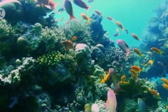 14 pemimpin dunia berkomitmen mengelola laut berkelanjutan