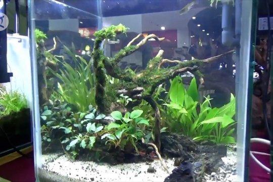Pameran aquascape dan tanaman hias untuk dongkrak UMKM