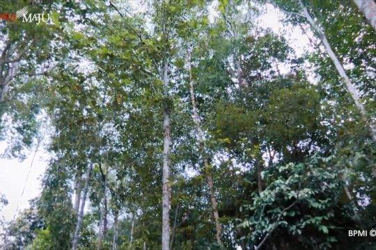UU Ciptaker berikan hak kelola hutan kepada masyarakat penggarap hutan