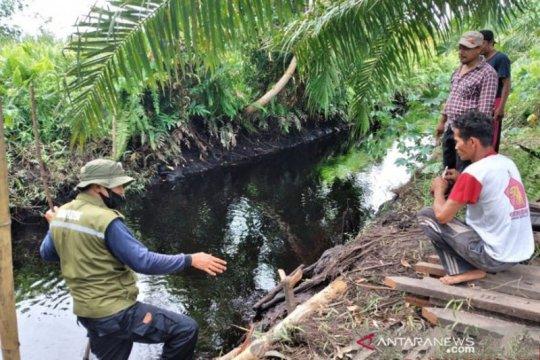 Buaya terkam nenek di Sampit hingga tangan putus