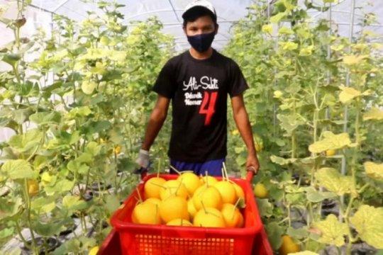 JPS dan curhat petani kala pandemi