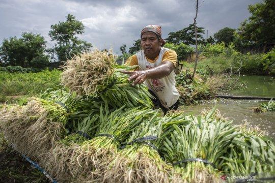 Pakar: Sektor pertanian jadi sandaran selama resesi ekonomi