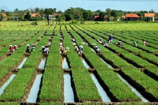 Polbangtan YoMa hasilkan alternatif sumber benih bawang merah