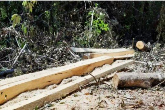 Wakil Ketua DPRD Takalar ditetapkan tersangka kasus perusakan hutan
