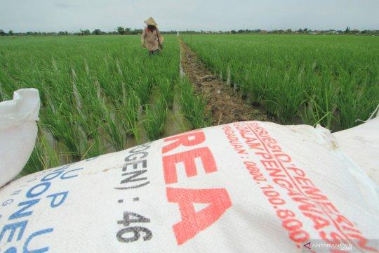 Potensi kekurangan, KTNA: hanya 43 persen petani berhak pupuk subsidi