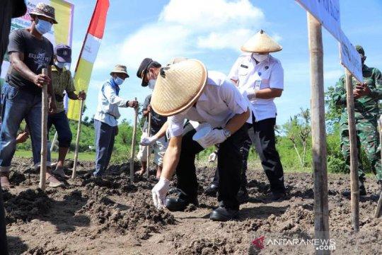 Gubernur Sulbar canangkan penanaman 30 hektare kedelai
