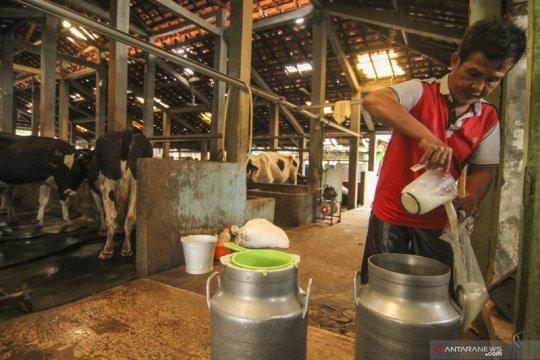 Jakarta Selatan miliki 175 peternak yang menghasilkan daging dan susu