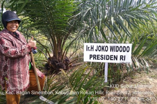 Apkasindo: RPP Cipta Kerja Sektor Kehutanan rugikan petani sawit