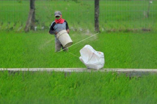 Petani Indramayu sulit dapatkan pupuk subsidi