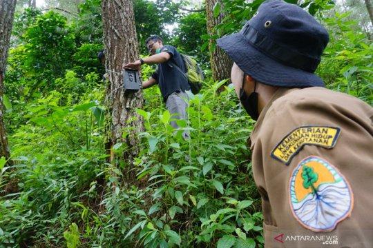 BKSDA pasang kamera pendeteksi harimau di lereng Gunung Wilis