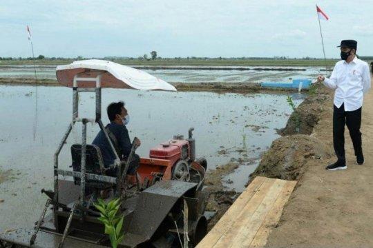 Pembangunan pertanian skala luas sebagai sebuah solusi