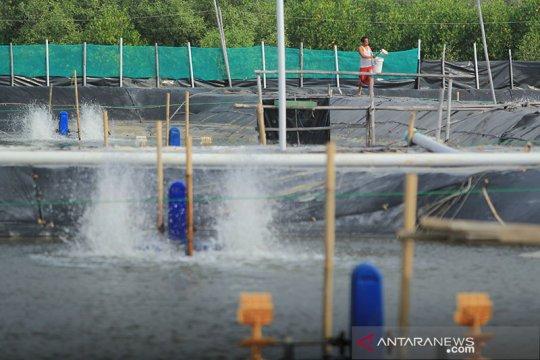 Dorong produksi udang, industri kincir dan pompa air disiapkan