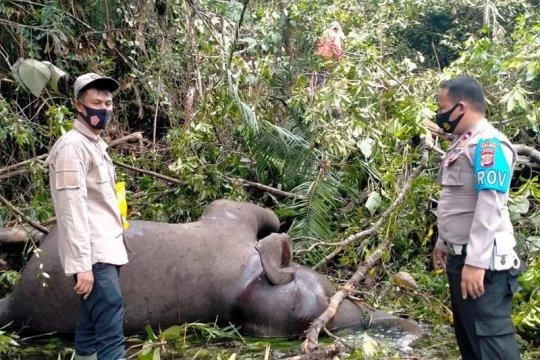BKSDA belum bisa pastikan penyebab kematian gajah di Bener Meriah