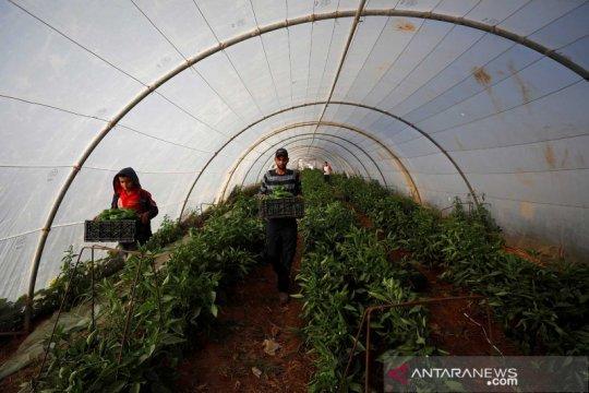 Pertanian warga Palestina di Tepi Barat