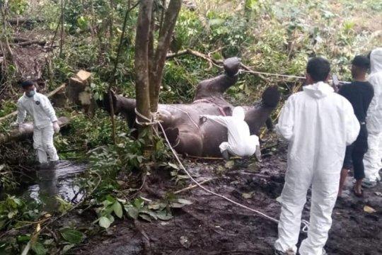 BKSDA duga gajah mati di Bener Meriah karena keracunan pupuk