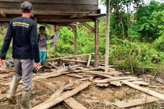 Kawanan gajah liar rusak perkebunan warga di Aceh Timur