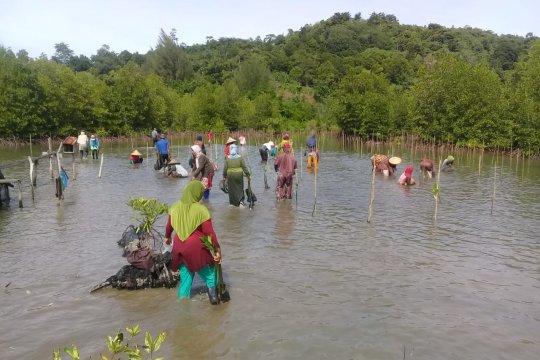 KKP tanam hingga 2,9 juta batang mangrove selama tahun 2020