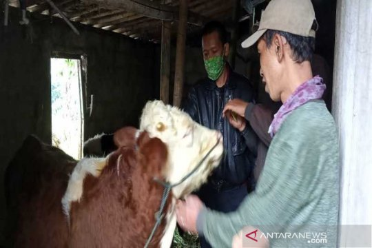 "Antisipasi erupsi Merapi, ternak di Boyolali diberi ""necktag"""