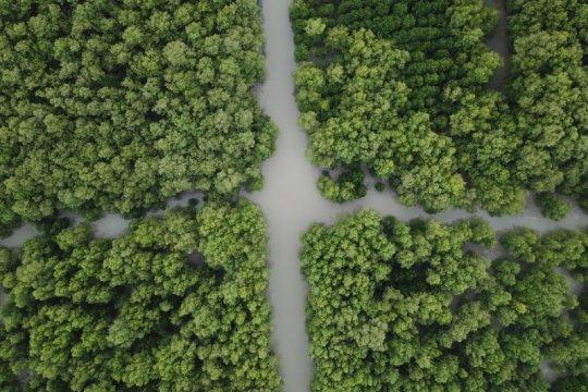 BRGM kedepankan pendekatan lintas sektor rehabilitasi mangrove 2021