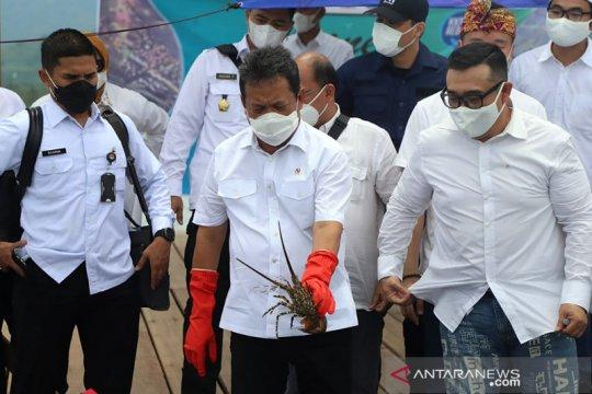 "Menteri Kelautan akan ""allout"" kembangkan budi daya lobster domestik"