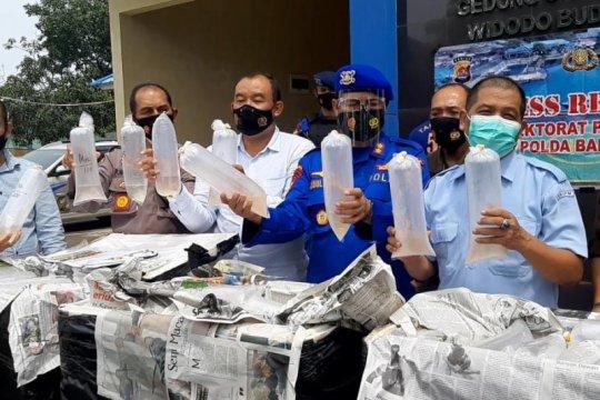 Polairud Polda Banten gagalkan penjualan benih lobster Rp6 miliar