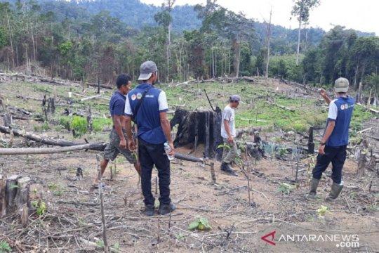 Polisi sebut harimau sumatera masuk ladang warga di Mukomuko, Bengkulu