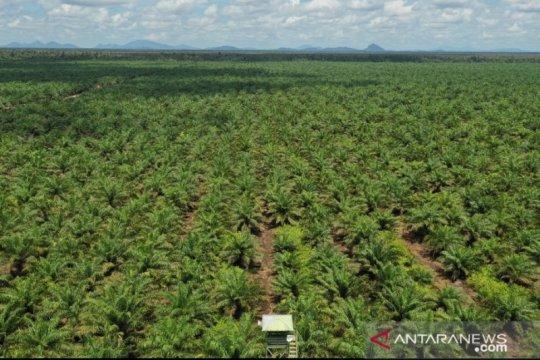 Gapki Kalbar optimis produksi dan harga CPO 2021 tetap baik