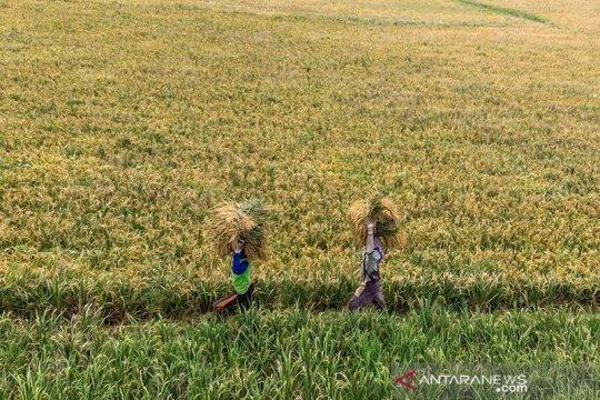 Baleg DPR: UU pangan strategis bagi kemampuan produksi secara mandiri