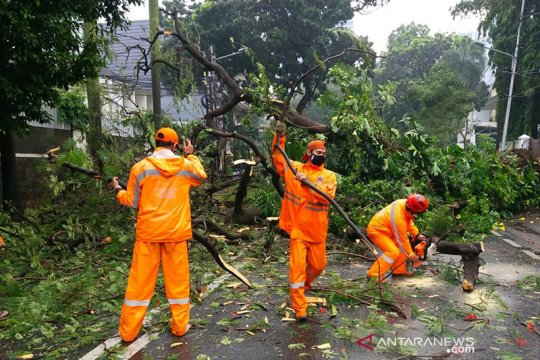 Jakarta Selatan dirikan posko antisipasi pohon tumbang
