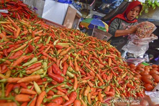 Harga cabai rawit di Lombok melonjak tajam hingga Rp90 ribu per kg
