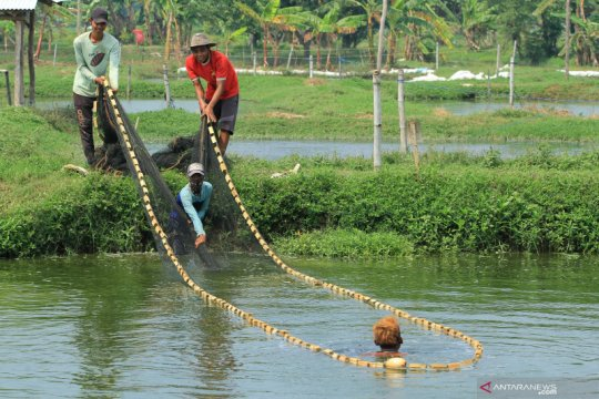 KKP bayarkan klaim asuransi bagi pembudi daya terkena banjir Indramayu