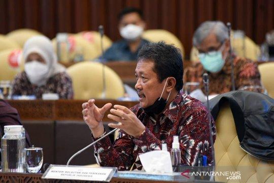 Menteri KKP sebut masih kaji terkait kebijakan komoditas lobster