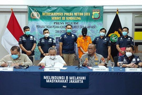 Polda Metro Jaya ringkus seorang penjual satwa dilindungi