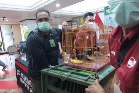 Kemarin, penjual satwa diringkus dan Jak88 Priok-Ancol dioperasikan