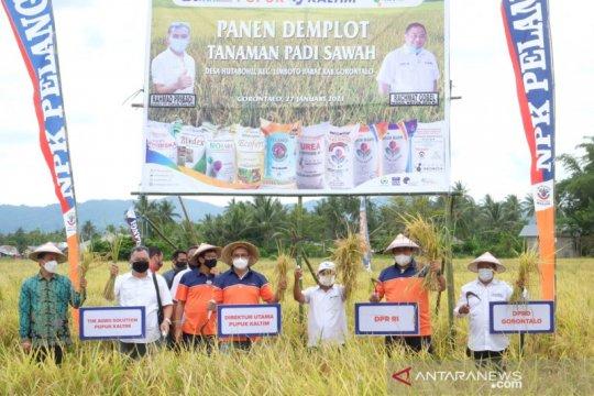 Agro Solution Pupuk Kaltim tingkatkan produktivitas padi Gorontalo
