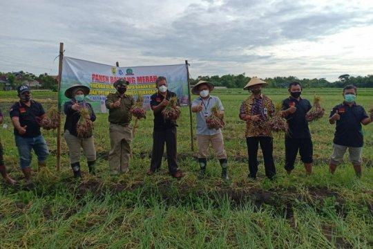 BI dorong produktivitas pertanian melalui program pendampingan