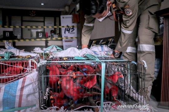 Balai Karantina gagalkan penyeludupan 268 burung nuri