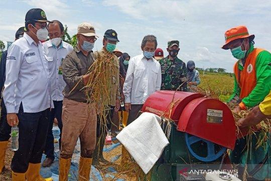 BRGM butuh dana awal Rp18,4 triliun untuk rehabilitasi mangrove kritis