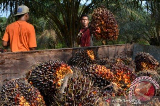 Isu sawit Indonesia-EU, Hongaria dukung perlakuan yang adil