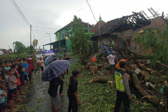 Sejumlah pohon di Blitar tumbang akibat angin kencang