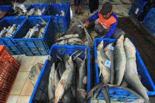 Pengamat: Upaya peningkatan PNBP perikanan perlu perhatikan konservasi
