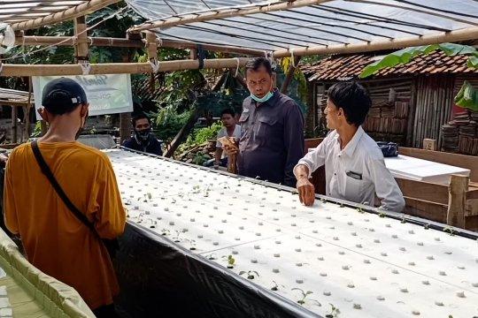 Korban PHK kembangkan tanaman sayur sistem apung