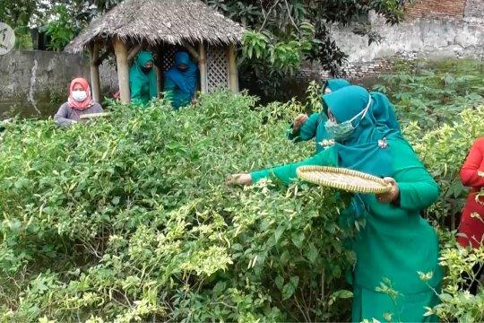 Manfaatkan lahan kosong, ibu-ibu PKK budidaya cabai